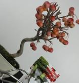 Bonsai Geschenk Zierapfel, nr. G43
