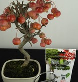 Bonsai gift set Crabapple, no. G43