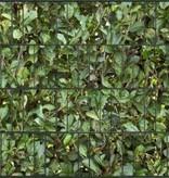 Gipea Design Band: Zichtbescherming Tuin, nu schutting zicht dicht met Laurierskers !