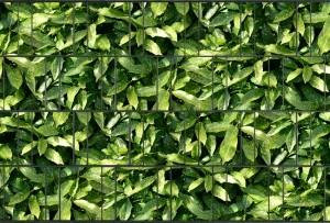 Gipea Design Band: Zichtbescherming Tuin, nu schutting zicht dicht met Aukube