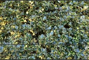 Gipea Design Band: Zichtbescherming Tuin, nu schutting zicht dicht met larix