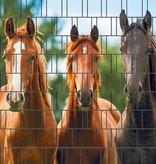 3-d band paard