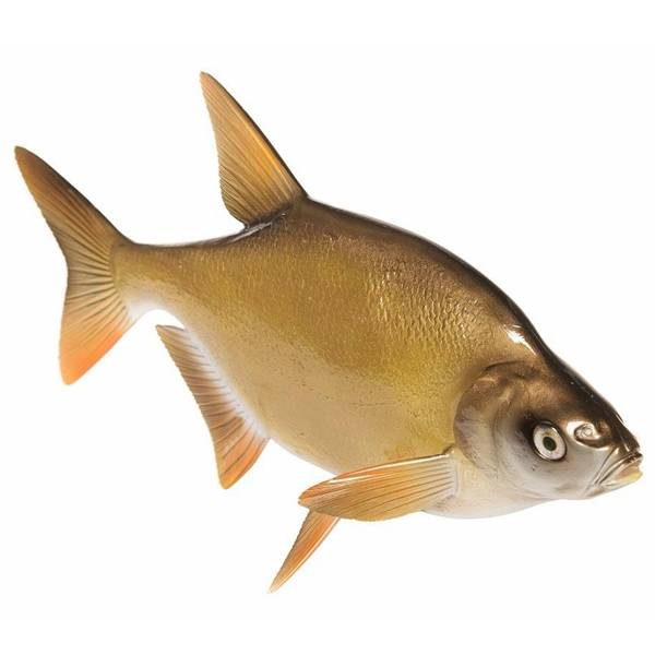 Fish Replica's Brasem