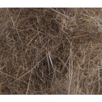 Swiss CDC Argentinian Long Hare Dubb