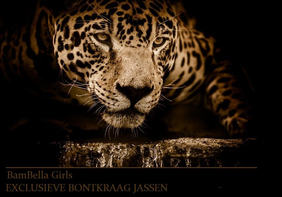 jaguar-2894706-960-720.jpg