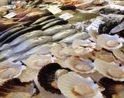 Vis en visproducten