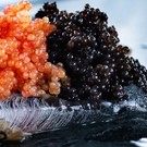 Altonaer Kaviar Import Imitatiekaviaar