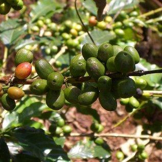 Harar Coffee Harar koffiebonen