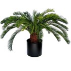 Cycas Palm Deluxe 140cm