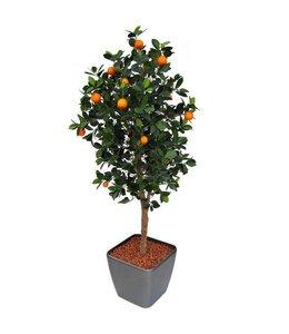 Sinaasappelboom Deluxe 150cm