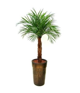 Areca Palm op stam 175cm