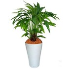 Calathea groen 85cm