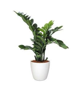 Zamioculcas kunstplant 65 cm