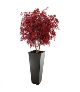 Acer Maple deluxe 165cm burgundy