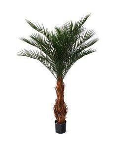 Phoenix Palm Deluxe 180m