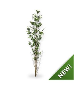 Oriental Bamboe tak recht 150 cm