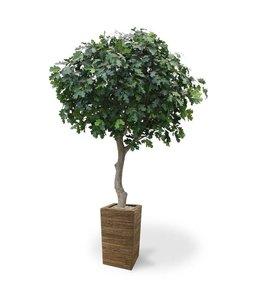 Eikenboom Giant Deluxe 300 cm