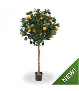Sinaasappelboom op stam 120 cm
