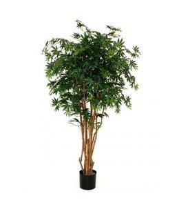 Acer groen 160cm N