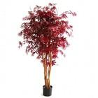 Acer Burgundy 160cm N