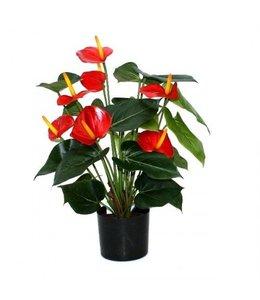 Anthurium Deluxe rood 50cm