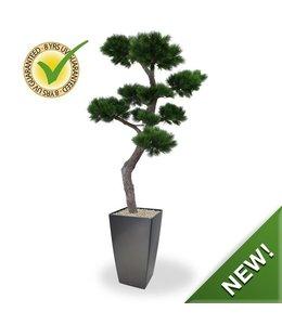 Pinus Bonsai XL 200 cm UV