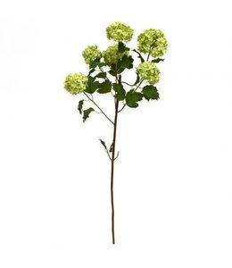 Viburnum x6 110 cm wit