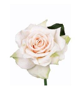 Roos Quiannie 30 cm Limegroen