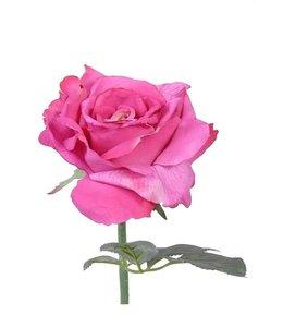 Roos Quiannie 30 cm Cerise