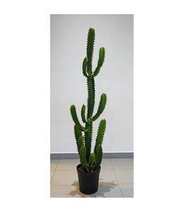 Mexicaanse Finger Cactus 136cm