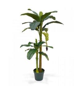 Bananenboom 180 cm x2