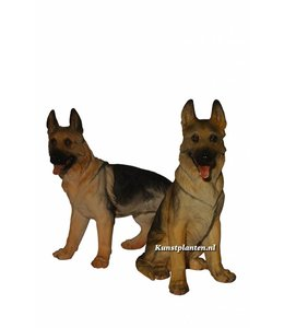 Duo herdershonden groot