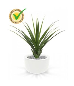 Ananas plant 90 cm UV