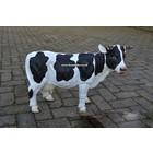 Koe met hoorns