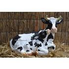 Liggende koe/kalf
