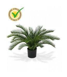 Cycas Palm 60 cm Deluxe UV