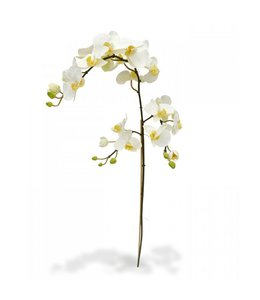 Phalaenopsis Tak XL 110 cm wit