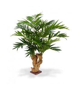 Parlour Palm 70 cm op voet