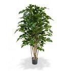 Ficus Exotica Deluxe 125 cm groen