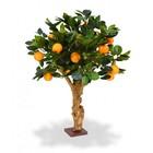 Sinaasappel Bonsai 65 cm op voet