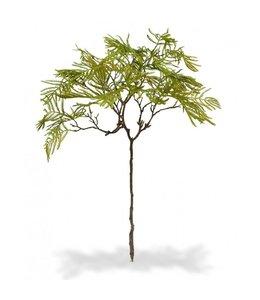Bonsai Varen tak 70 cm