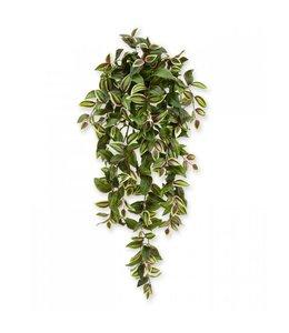 Tradescantia hangplant 100 cm bont