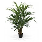 Kentia Palm XL Deluxe 140 cm