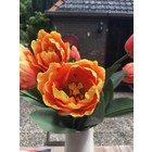 Tulp papegaai oranje/geel