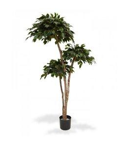 Ficus Exotica Layer x3 180 cm