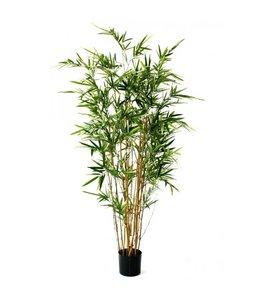 Bamboe bont 170cm