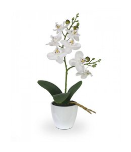 Phalaenopsis Orchidee kunstplant 30 cm x2 in sierpot