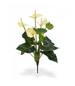Anthurium boeket 40 cm crème
