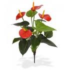 Anthurium boeket 40 cm rood