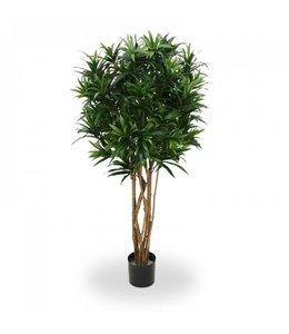 Draceana Reflexa groen 150cm